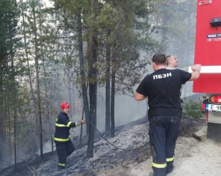 Още един пожар: Гори борова гора край Разлог