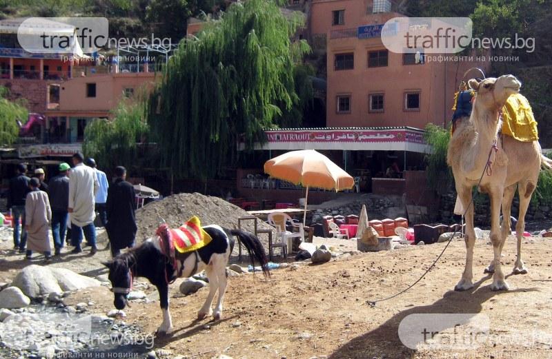 Защо ваканция при камилите е сред предпочитаните от българина