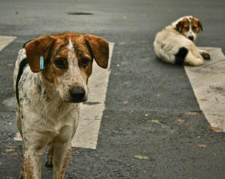 Базар с кауза събира пари в помощ на бездомните животни в Благоевград