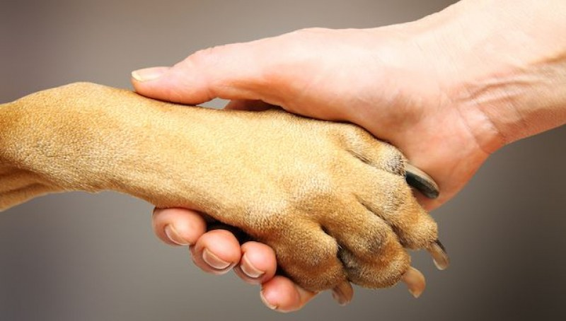 Жена подарява дома си, ако някой се грижи за две пострадали кучета