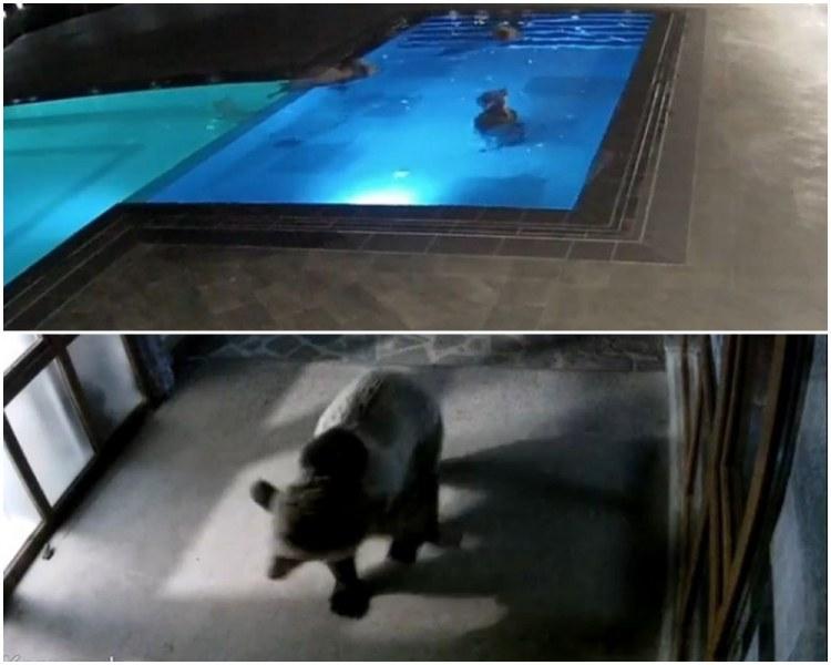 До дни ще решават къде ще е новият дом на мечето плувец Суими