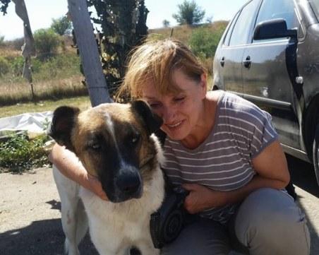 Осиновявай, не купувай: Над 700 кучета от столичните приюти с нови стопани