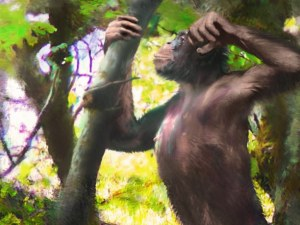 Откриха нов човешки прародител, който променя представите за човешката еволюция