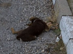 Тровят кучета в асеновградски квартал