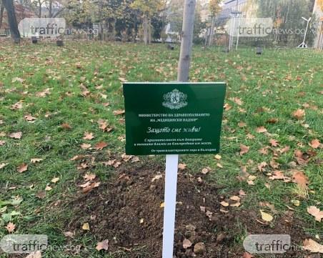 Почетоха с лирово дърво край НДК донорите, дарили органите си