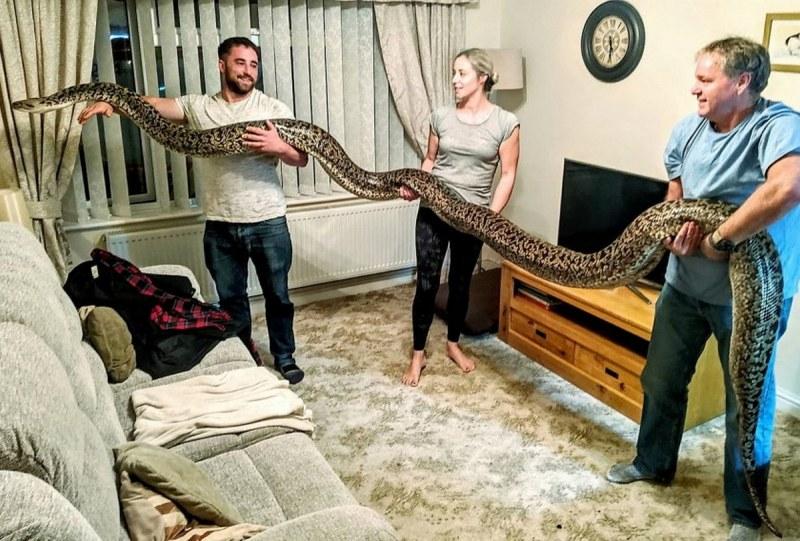 Семейството, което отглежда 7-метров питон в дома си