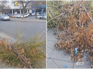 Дръвче падна преди месеци на улица в Пловдив, минувачи го превърнаха в кошче за боклук