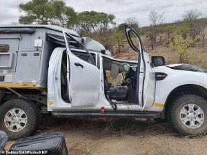 Жираф падна върху джип с туристи в ЮАР, предизвика катастрофа