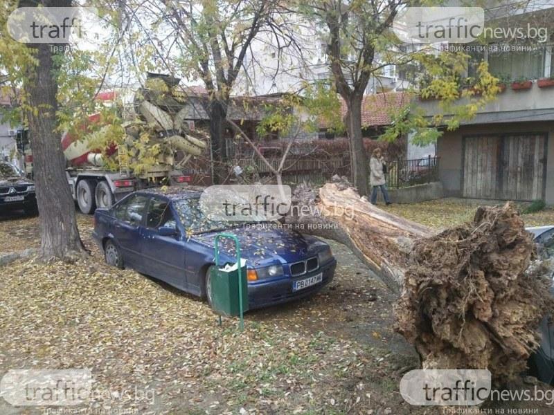 Огромно дърво се стовари на метри от детска градина в Пловдив и потроши BMW