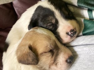 Изхвърлиха 17 малки кученца на студа в София, търсят им спешно дом