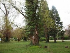 60-вековни дървета преброиха в Пазарджишко