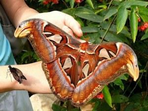 Пеперудите на Природонаучния музей спират да летят пред публика за месец