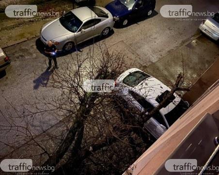 Пловдивчанин за сгромолясалото се дърво: Чу се невероятен трясък, много се уплашихме!