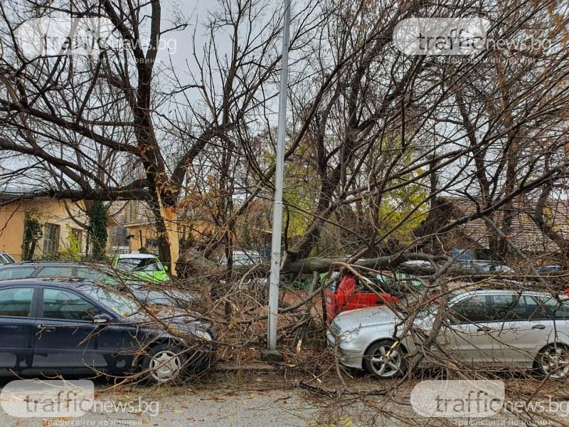 Дърво се разцепи и падна върху 4 коли в Пловдив