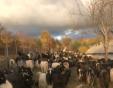 Да напуснеш Пловдив, за да гледаш 230 кози в ранчо
