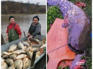 Сом колкото малка акула уловиха в Пловдивско