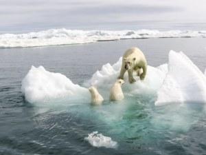Арктика изпраща втората най-топла година от век насам