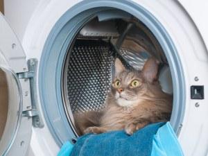 Коте попадна в работеща пералня, вижте колко време прекара вътре