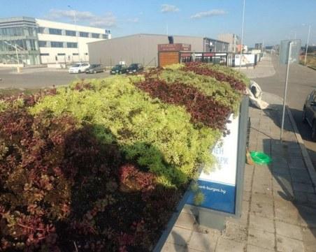 Автобусни спирки в Бургас с градинки на покрива, пречистват въздуха
