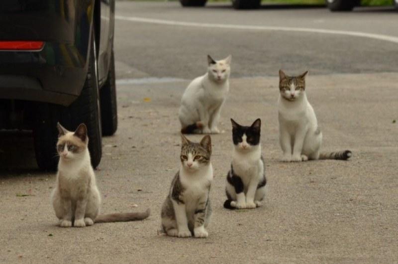 Над 100 котки са били убити в Бургас само за месец
