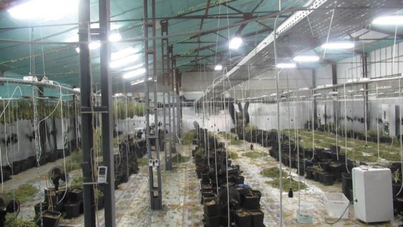 Мащабна акция в Русе: Хванаха наркотици за 1 млн. лв., арестувани са 7 души