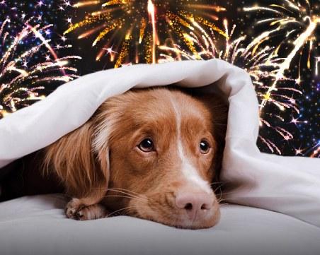 Пазете домашните си любимци по празниците! Как да спасим животните от фойерверките?