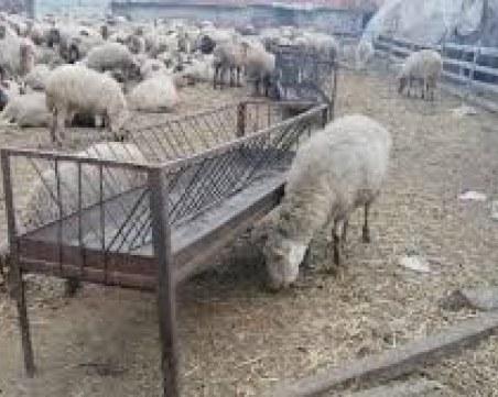 400 домашни животни - обречени на гладна смърт след пожар край Пловдив