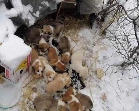 12 кученца мръзнат в снега край Цигов чарк, търсят им приемни домове