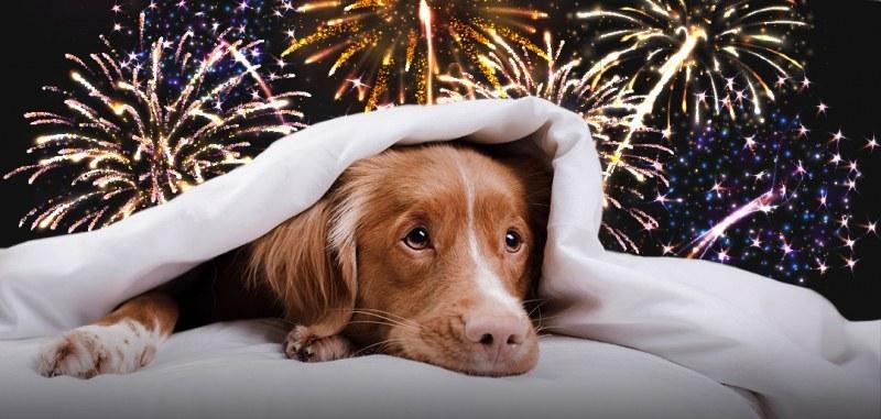 Тъжната история на Тоби, който на Нова година ще бъде приспан