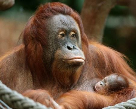 Пожар причини смъртта на десетки животни в зоопарк