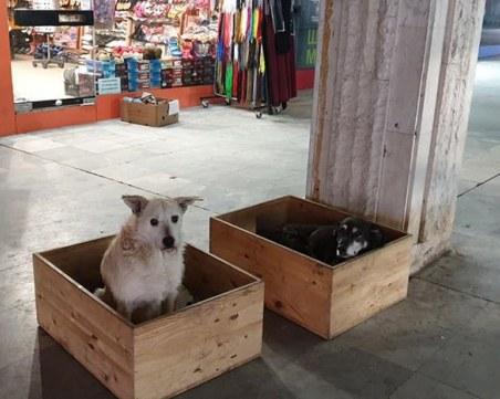 Добро дело! Къщички топлят бездомните кучета в столичен подлез