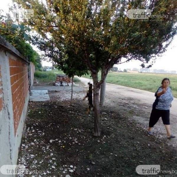 Ромката, обесила куче в Раковски, ще отговаря пред Темида