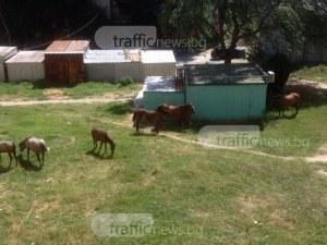 Колко струва да си гледаш коне в градинка в Столипиново? Ром го разбра по трудния начин