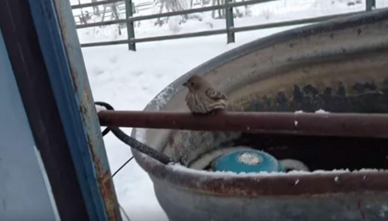 Трогателно: Човек върна към живот замръзнало врабче ВИДЕО