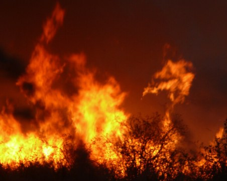 Голям пожар обхвана Драгоманското блато, стотици видове животни са застрашени