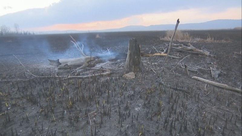 Една трета от Драгоманското блато е изгоряла