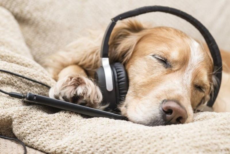 Каква музика харесват домашните ви любимци?
