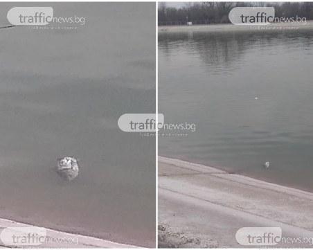 Мъртви риби изплуваха в Гребния канал в Пловдив