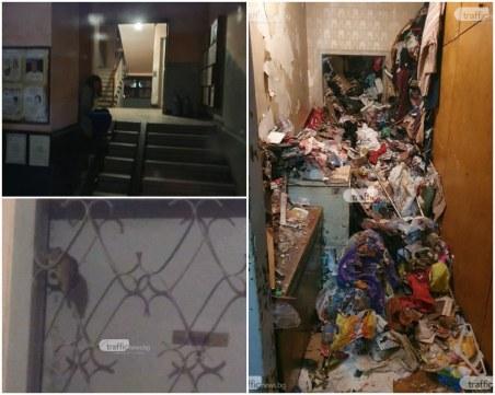 Плъхове полазиха апартаментите в блока на ужасите в Кючука! Сградата ще изгори, ако тръгне огън