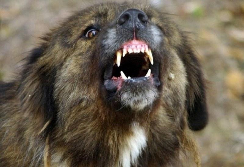 Мъж, нахапан от бездомно куче, получава 70 бона обезщетение от Община Горна Оряховица