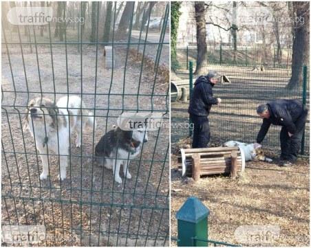 Пловдивчани зарязаха двете си кучета повече от ден на площадка, добри хора ги спасиха