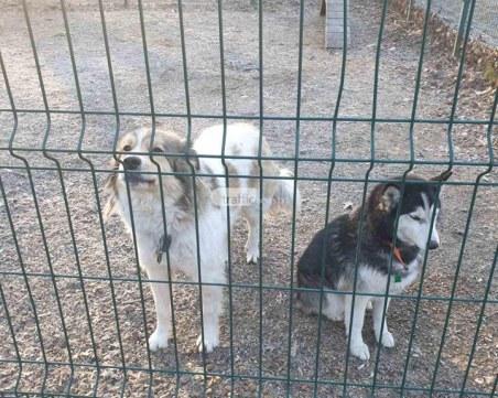 Стопаните на кучетата, затворени в клетката до