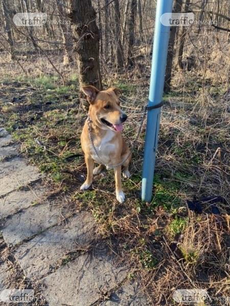 Кучето на пенсионера, който открадна пистолет на самоубиец, скита безпризорно из Лаута