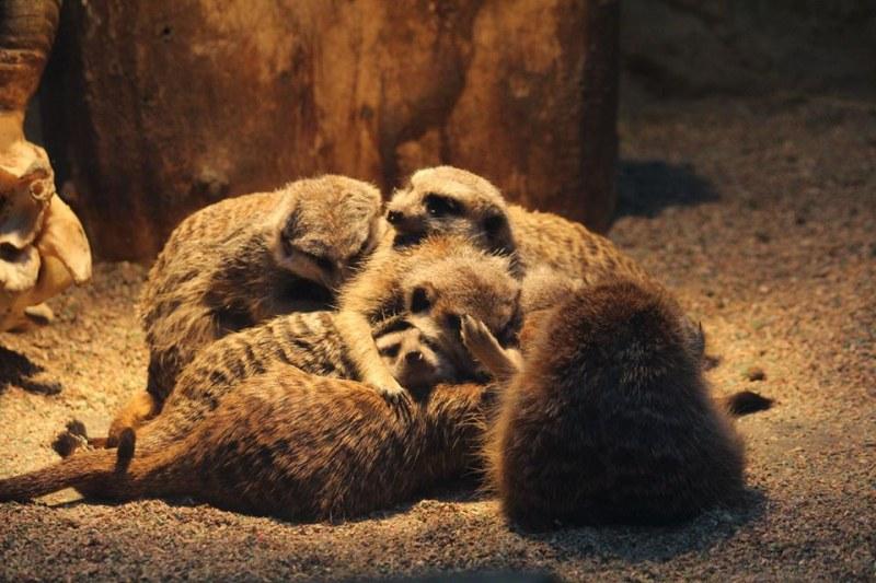 Столичният зоопарк вече предлага и виртуална разходка