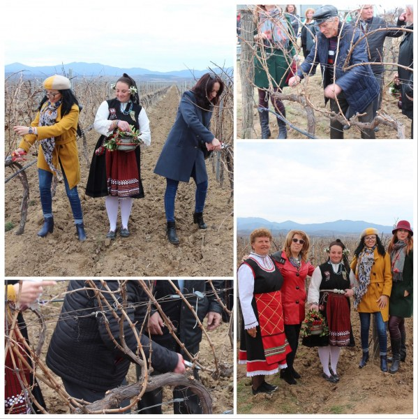 Известна марка вино подготви лозя край Хисаря за новата реколта