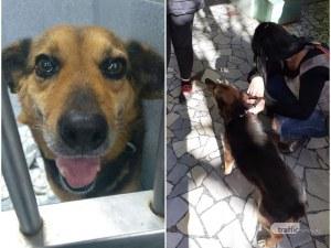 Осакатиха кученце, скита се окървавено в центъра на Пловдив
