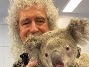 Брайън Мей свири за коала, оцеляла в пожарите в Австралия