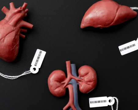 Продължава трафикът на хора като донори за трансплантации