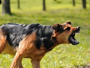 Куче отхапа палеца на инкасатор в Пазарджишко