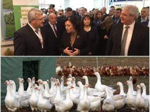 Министър Танева в Пловдив: Заразените над 6000 птици в Раковски са умъртвени